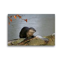 Premium Textil-Leinwand 45 x 30 cm Quer-Format Fischotter | Wandbild, HD-Bild auf Keilrahmen, Fertigbild auf hochwertigem Vlies, Leinwanddruck von Antje Lindert-Rottke