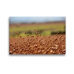 Premium Textil-Leinwand 45 x 30 cm Quer-Format Flachs | Wandbild, HD-Bild auf Keilrahmen, Fertigbild auf hochwertigem Vlies, Leinwanddruck von Flori0