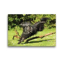 Premium Textil-Leinwand 45 x 30 cm Quer-Format Flying Theo | Wandbild, HD-Bild auf Keilrahmen, Fertigbild auf hochwertigem Vlies, Leinwanddruck von Karolin Heepmann