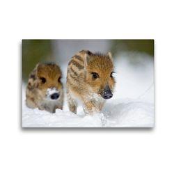 Premium Textil-Leinwand 45 x 30 cm Quer-Format Frischlinge im Schnee | Wandbild, HD-Bild auf Keilrahmen, Fertigbild auf hochwertigem Vlies, Leinwanddruck von Wilfried Martin