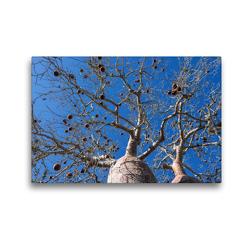 Premium Textil-Leinwand 45 x 30 cm Quer-Format Früchte des Baobab (Adansonia rubrostipa)   Wandbild, HD-Bild auf Keilrahmen, Fertigbild auf hochwertigem Vlies, Leinwanddruck von Olaf Bruhn