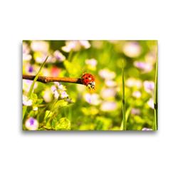 Premium Textil-Leinwand 45 x 30 cm Quer-Format Gefühle eines Sommertages | Wandbild, HD-Bild auf Keilrahmen, Fertigbild auf hochwertigem Vlies, Leinwanddruck von Bettina Hackstein