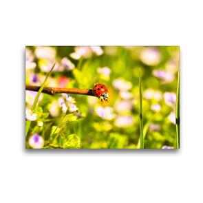 Premium Textil-Leinwand 45 x 30 cm Quer-Format Gefühle eines Sommertages   Wandbild, HD-Bild auf Keilrahmen, Fertigbild auf hochwertigem Vlies, Leinwanddruck von Bettina Hackstein