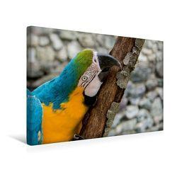 Premium Textil-Leinwand 45 x 30 cm Quer-Format Gelbbrustara   Wandbild, HD-Bild auf Keilrahmen, Fertigbild auf hochwertigem Vlies, Leinwanddruck von Angelika Beuck von Beuck,  Angelika