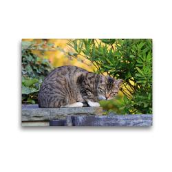 Premium Textil-Leinwand 45 x 30 cm Quer-Format Getigerte Katze | Wandbild, HD-Bild auf Keilrahmen, Fertigbild auf hochwertigem Vlies, Leinwanddruck von Sabine Löwer