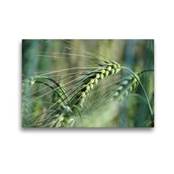 Premium Textil-Leinwand 45 x 30 cm Quer-Format Getreide | Wandbild, HD-Bild auf Keilrahmen, Fertigbild auf hochwertigem Vlies, Leinwanddruck von Flori0