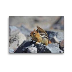 Premium Textil-Leinwand 45 x 30 cm Quer-Format Goldmantelziesel im Crater Lake Nationalpark (USA) | Wandbild, HD-Bild auf Keilrahmen, Fertigbild auf hochwertigem Vlies, Leinwanddruck von Jana Thiem-Eberitsch