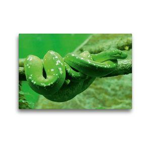 Premium Textil-Leinwand 45 x 30 cm Quer-Format Grüne Baumpython (Morelia viridis) | Wandbild, HD-Bild auf Keilrahmen, Fertigbild auf hochwertigem Vlies, Leinwanddruck von kattobello