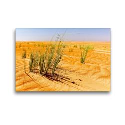 Premium Textil-Leinwand 45 x 30 cm Quer-Format Grüne Gräser der Wüste | Wandbild, HD-Bild auf Keilrahmen, Fertigbild auf hochwertigem Vlies, Leinwanddruck von Jürgen Feuerer