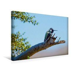 Premium Textil-Leinwand 45 x 30 cm Quer-Format Grüner Kolibri in den USA | Wandbild, HD-Bild auf Keilrahmen, Fertigbild auf hochwertigem Vlies, Leinwanddruck von Robert Styppa von Styppa,  Robert