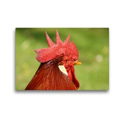 Premium Textil-Leinwand 45 x 30 cm Quer-Format Hahnen Haupt   Wandbild, HD-Bild auf Keilrahmen, Fertigbild auf hochwertigem Vlies, Leinwanddruck von Kattobello