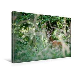 Premium Textil-Leinwand 45 x 30 cm Quer-Format Heimlicher Rehbock | Wandbild, HD-Bild auf Keilrahmen, Fertigbild auf hochwertigem Vlies, Leinwanddruck von Ingo Gerlach