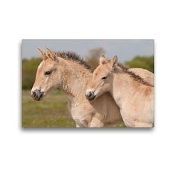 Premium Textil-Leinwand 45 x 30 cm Quer-Format Henson Pferde Fohlen | Wandbild, HD-Bild auf Keilrahmen, Fertigbild auf hochwertigem Vlies, Leinwanddruck von Meike Bölts