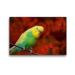 Premium Textil-Leinwand 45 x 30 cm Quer-Format Herbstimpressionen eines Wellensittichs | Wandbild, HD-Bild auf Keilrahmen, Fertigbild auf hochwertigem Vlies, Leinwanddruck von Björn Bergmann
