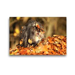 Premium Textil-Leinwand 45 x 30 cm Quer-Format Herbstlaub | Wandbild, HD-Bild auf Keilrahmen, Fertigbild auf hochwertigem Vlies, Leinwanddruck von Karolin Heepmann