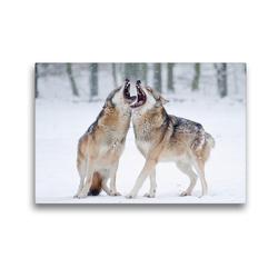 Premium Textil-Leinwand 45 x 30 cm Quer-Format Heulende Wölfe | Wandbild, HD-Bild auf Keilrahmen, Fertigbild auf hochwertigem Vlies, Leinwanddruck von Wilfried Martin