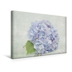 Premium Textil-Leinwand 45 x 30 cm Quer-Format Hortensienstillleben   Wandbild, HD-Bild auf Keilrahmen, Fertigbild auf hochwertigem Vlies, Leinwanddruck von Heike Hultsch