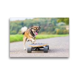Premium Textil-Leinwand 45 x 30 cm Quer-Format Hund mit Skateboard | Wandbild, HD-Bild auf Keilrahmen, Fertigbild auf hochwertigem Vlies, Leinwanddruck von Christian Müller