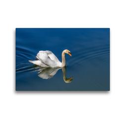 Premium Textil-Leinwand 45 x 30 cm Quer-Format Imponiergehabe   Wandbild, HD-Bild auf Keilrahmen, Fertigbild auf hochwertigem Vlies, Leinwanddruck von Ursula Di Chito