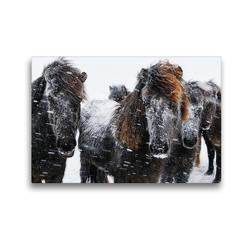 Premium Textil-Leinwand 45 x 30 cm Quer-Format Islandpferde im Schneesturm | Wandbild, HD-Bild auf Keilrahmen, Fertigbild auf hochwertigem Vlies, Leinwanddruck von Klaus Gerken