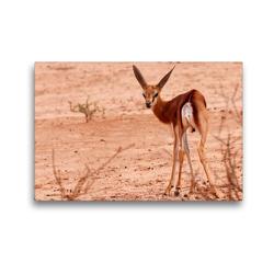 Premium Textil-Leinwand 45 x 30 cm Quer-Format Junges Impala in der Etosha Pfanne, Afrika | Wandbild, HD-Bild auf Keilrahmen, Fertigbild auf hochwertigem Vlies, Leinwanddruck von Birgit Scharnhorst