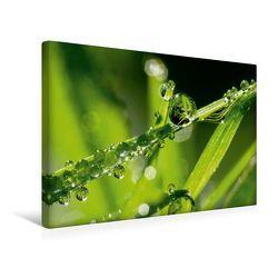 Premium Textil-Leinwand 45 x 30 cm Quer-Format Kalender | Wandbild, HD-Bild auf Keilrahmen, Fertigbild auf hochwertigem Vlies, Leinwanddruck von Gabi Siebenhühner