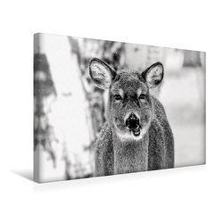 Premium Textil-Leinwand 45 x 30 cm Quer-Format Kanadischer Weißwedelhirsch | Wandbild, HD-Bild auf Keilrahmen, Fertigbild auf hochwertigem Vlies, Leinwanddruck von Marianne Drews