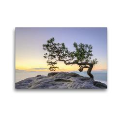 Premium Textil-Leinwand 45 x 30 cm Quer-Format Kiefer auf dem Lilienstein | Wandbild, HD-Bild auf Keilrahmen, Fertigbild auf hochwertigem Vlies, Leinwanddruck von Michael Valjak