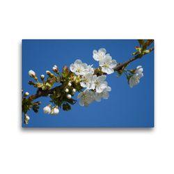 Premium Textil-Leinwand 45 x 30 cm Quer-Format Kirschblüte | Wandbild, HD-Bild auf Keilrahmen, Fertigbild auf hochwertigem Vlies, Leinwanddruck von kattobello