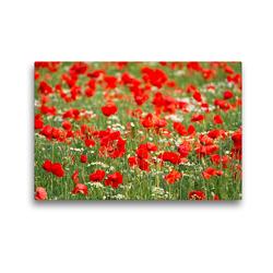 Premium Textil-Leinwand 45 x 30 cm Quer-Format Klatschmohn-Feld | Wandbild, HD-Bild auf Keilrahmen, Fertigbild auf hochwertigem Vlies, Leinwanddruck von Elisabeth Schittenhelm