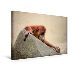 Premium Textil-Leinwand 45 x 30 cm Quer-Format Kleiner Orang Utan | Wandbild, HD-Bild auf Keilrahmen, Fertigbild auf hochwertigem Vlies, Leinwanddruck von Heike Hultsch von Hultsch,  Heike