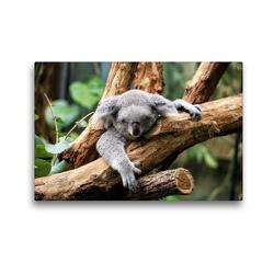 Premium Textil-Leinwand 45 x 30 cm Quer-Format Koala Bär auf einem Baum in Australien | Wandbild, HD-Bild auf Keilrahmen, Fertigbild auf hochwertigem Vlies, Leinwanddruck von Christian Colista