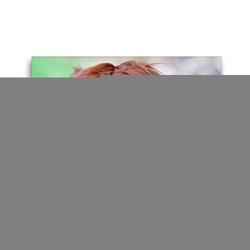 Premium Textil-Leinwand 45 x 30 cm Quer-Format Kuschelig – Alpaka mit dem typisch dichten Fell | Wandbild, HD-Bild auf Keilrahmen, Fertigbild auf hochwertigem Vlies, Leinwanddruck von CALVENDO
