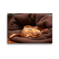 Premium Textil-Leinwand 45 x 30 cm Quer-Format Kuschelmaus | Wandbild, HD-Bild auf Keilrahmen, Fertigbild auf hochwertigem Vlies, Leinwanddruck von Annett Mirsberger tierpfoto