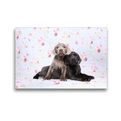 Premium Textil-Leinwand 45 x 30 cm Quer-Format Labrador Retriever Welpe / Labrador Retriever Puppy   Wandbild, HD-Bild auf Keilrahmen, Fertigbild auf hochwertigem Vlies, Leinwanddruck von Jeanette Hutfluss