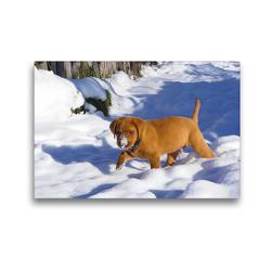 Premium Textil-Leinwand 45 x 30 cm Quer-Format Labradorwelpe stapft durch den tiefen Schnee | Wandbild, HD-Bild auf Keilrahmen, Fertigbild auf hochwertigem Vlies, Leinwanddruck von Alexandra Kurz