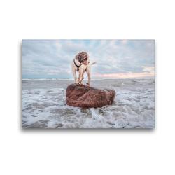 Premium Textil-Leinwand 45 x 30 cm Quer-Format Lagotto Romagnolo Freiheitsstatue an der Ostsee | Wandbild, HD-Bild auf Keilrahmen, Fertigbild auf hochwertigem Vlies, Leinwanddruck von Wuffclick-pic