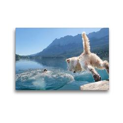 Premium Textil-Leinwand 45 x 30 cm Quer-Format Lagotto Romagnolo stürzt sich in die Fluten eines Gebirgssees | Wandbild, HD-Bild auf Keilrahmen, Fertigbild auf hochwertigem Vlies, Leinwanddruck von Wuffclick-pic