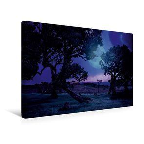 Premium Textil-Leinwand 45 x 30 cm Quer-Format Lorbeerbäume bei Nacht   Wandbild, HD-Bild auf Keilrahmen, Fertigbild auf hochwertigem Vlies, Leinwanddruck von Val Thoermer von Thoermer,  Val