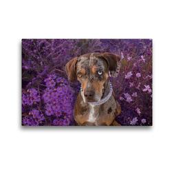Premium Textil-Leinwand 45 x 30 cm Quer-Format Louisiana Catahoula Leopard Dog | Wandbild, HD-Bild auf Keilrahmen, Fertigbild auf hochwertigem Vlies, Leinwanddruck von Catahouligan on Tour
