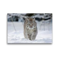 Premium Textil-Leinwand 45 x 30 cm Quer-Format Luchs läuft durch Schnee | Wandbild, HD-Bild auf Keilrahmen, Fertigbild auf hochwertigem Vlies, Leinwanddruck von Wilfried Martin