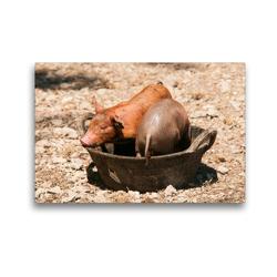 Premium Textil-Leinwand 45 x 30 cm Quer-Format Lustige Schweinchen | Wandbild, HD-Bild auf Keilrahmen, Fertigbild auf hochwertigem Vlies, Leinwanddruck von Meike Bölts