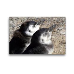 Premium Textil-Leinwand 45 x 30 cm Quer-Format Magellan-Pinguine   Wandbild, HD-Bild auf Keilrahmen, Fertigbild auf hochwertigem Vlies, Leinwanddruck von Flori0