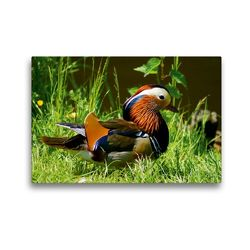 Premium Textil-Leinwand 45 x 30 cm Quer-Format Mandarinenten Erpel   Wandbild, HD-Bild auf Keilrahmen, Fertigbild auf hochwertigem Vlies, Leinwanddruck von Kattobello