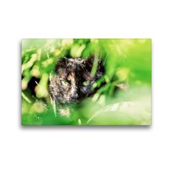Premium Textil-Leinwand 45 x 30 cm Quer-Format Mausi | Wandbild, HD-Bild auf Keilrahmen, Fertigbild auf hochwertigem Vlies, Leinwanddruck von N N