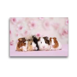 Premium Textil-Leinwand 45 x 30 cm Quer-Format Meerschweinchen | Wandbild, HD-Bild auf Keilrahmen, Fertigbild auf hochwertigem Vlies, Leinwanddruck von Jeanette Hutfluss