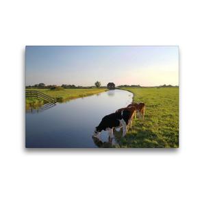 Premium Textil-Leinwand 45 x 30 cm Quer-Format Milchkühe beim Trinken   Wandbild, HD-Bild auf Keilrahmen, Fertigbild auf hochwertigem Vlies, Leinwanddruck von Steffani Lehmann