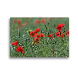 Premium Textil-Leinwand 45 x 30 cm Quer-Format Mohnblumen – Pure Faszination in Rot | Wandbild, HD-Bild auf Keilrahmen, Fertigbild auf hochwertigem Vlies, Leinwanddruck von Andrea Potratz