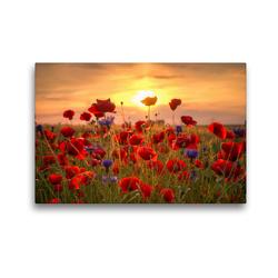 Premium Textil-Leinwand 45 x 30 cm Quer-Format Mohnblumen | Wandbild, HD-Bild auf Keilrahmen, Fertigbild auf hochwertigem Vlies, Leinwanddruck von Steffen Gierok