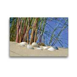 Premium Textil-Leinwand 45 x 30 cm Quer-Format Muscheln in der Düne | Wandbild, HD-Bild auf Keilrahmen, Fertigbild auf hochwertigem Vlies, Leinwanddruck von Susanne Herppich